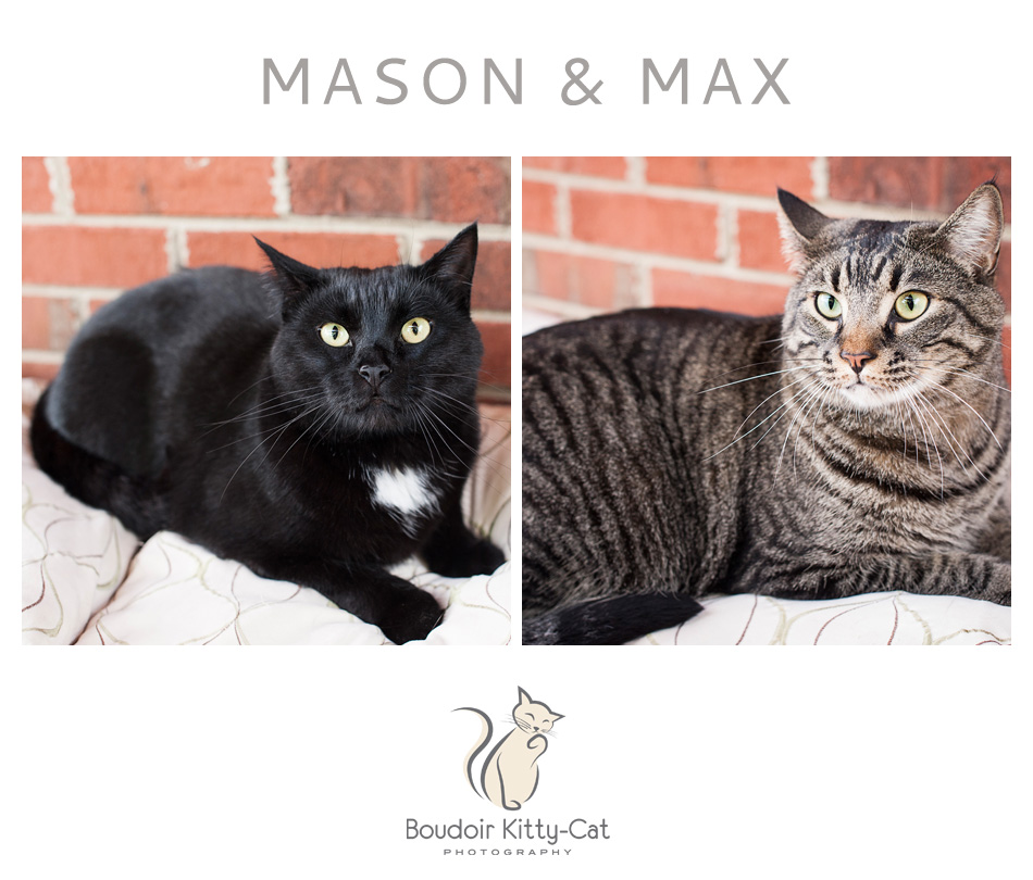 Cats For Adoption In Franklin County